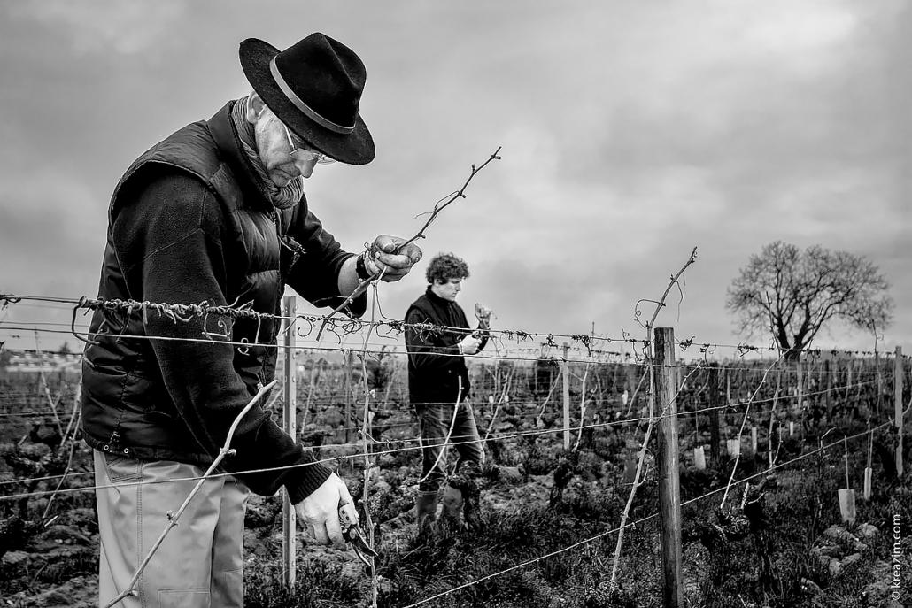 Das Bild zeigt die Winzer Laurent und Nicolas Daheuiller bei der Arbeit im Weinberg-Domaine des Varinelles Crémant de Loire AOP
