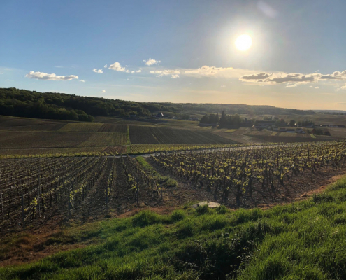 Das Bild zeigt eine Landschaft der Champagne